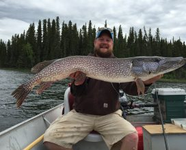 Trophy Northern Pike caught during a visit to the Molson Lake Lodge
